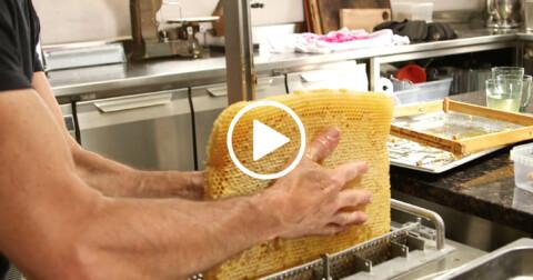 Honey with Francis Cardineau